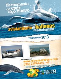 https://www.extremoaextremo.com/wp-content/uploads/2013/02/ballenas.jpg